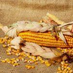 Łuskać kukurydzę
